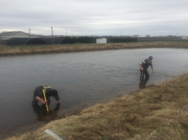 Hydrologists with Prairie Research Institute install temperature probe in experimental pond.